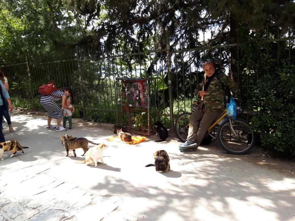 Pisici din Atena
